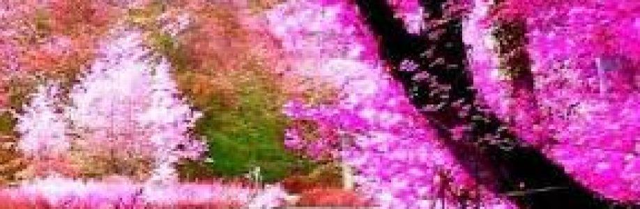 Priyo joti Chakma Cover Image