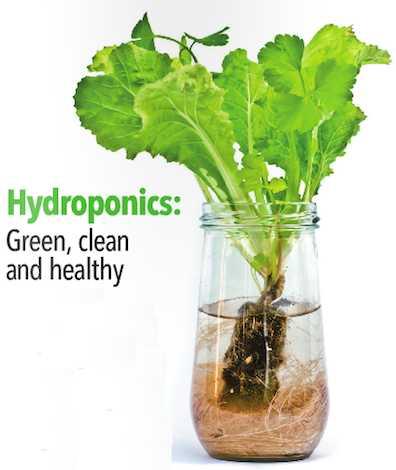 All Hydroponics Profile Picture